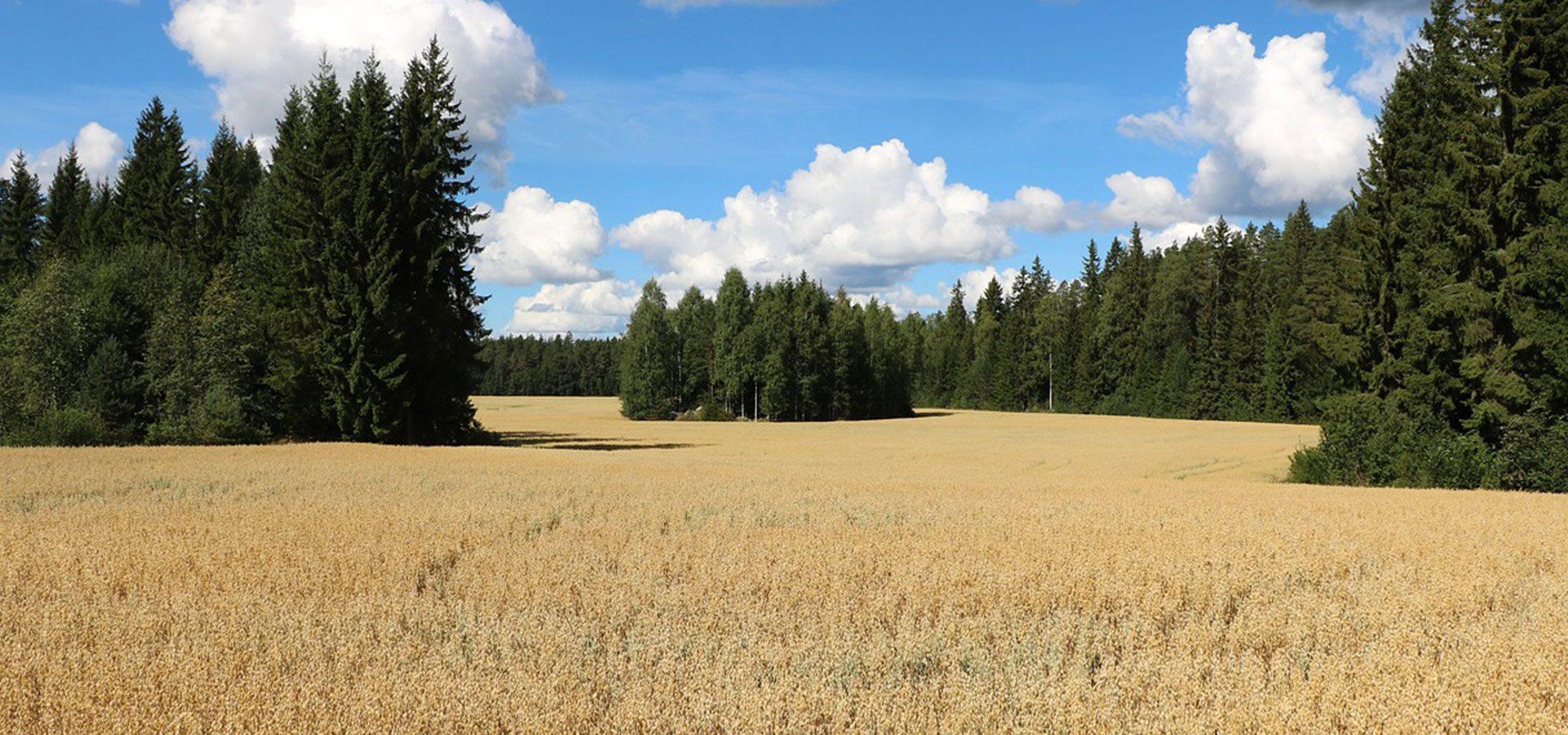 1920x900 oats field