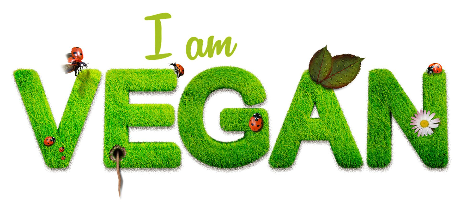 I'm Vegan 1920x900-60lower