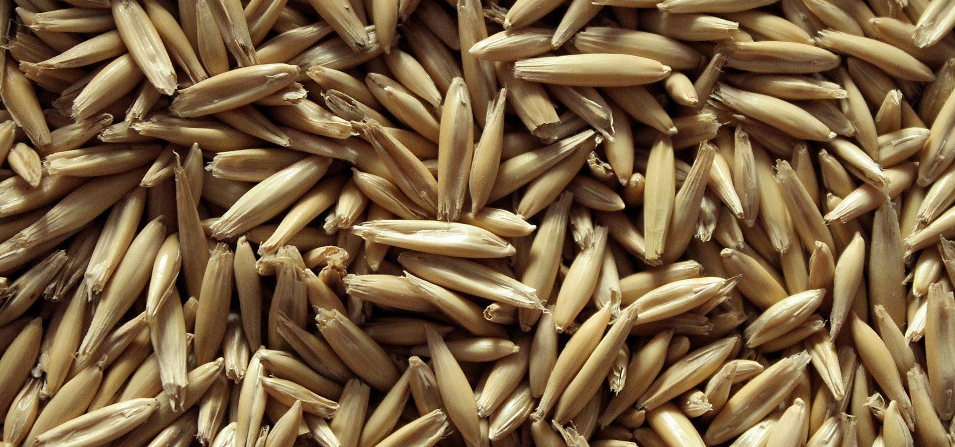 ground oats 1920x900-60%