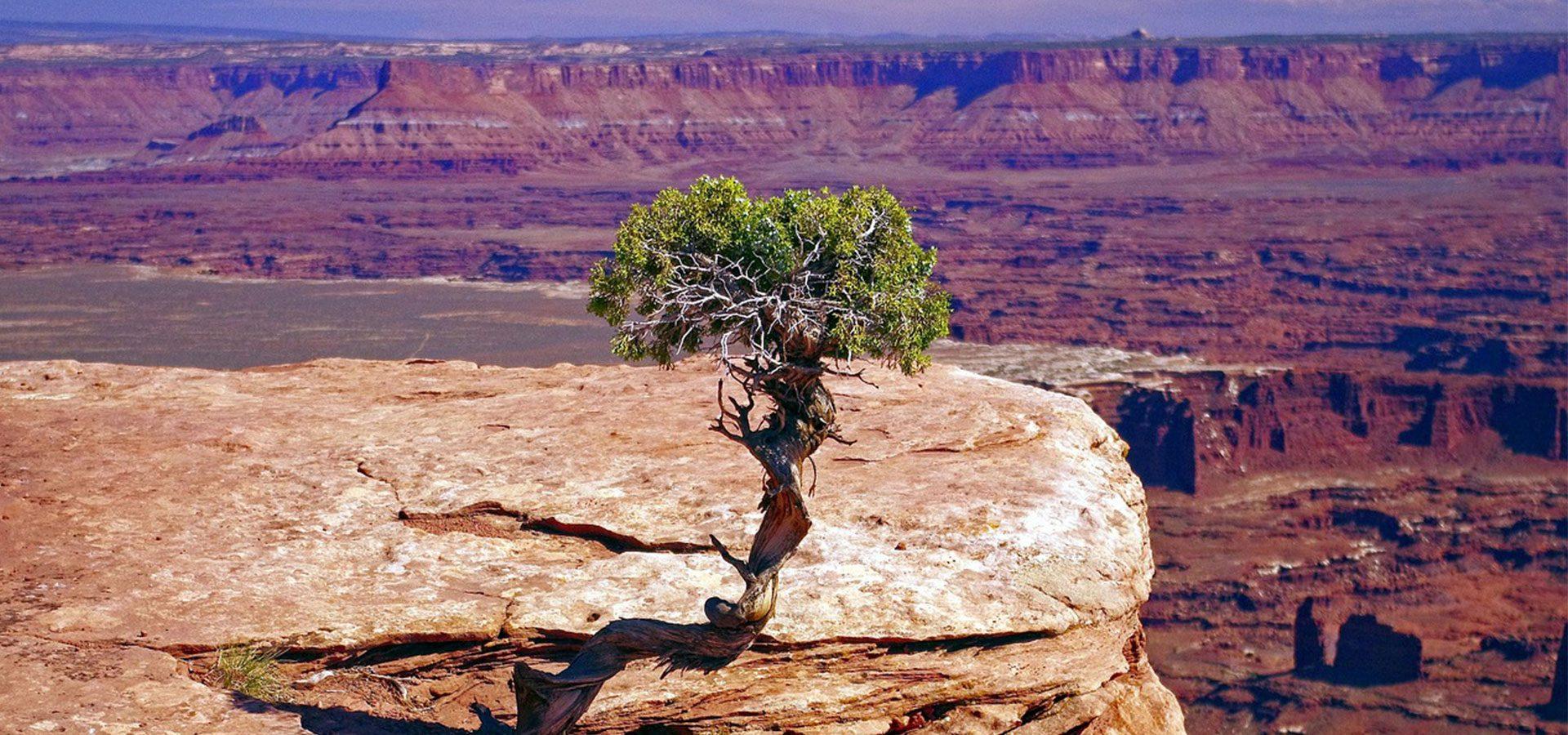 juniper tree 1920x900-lower